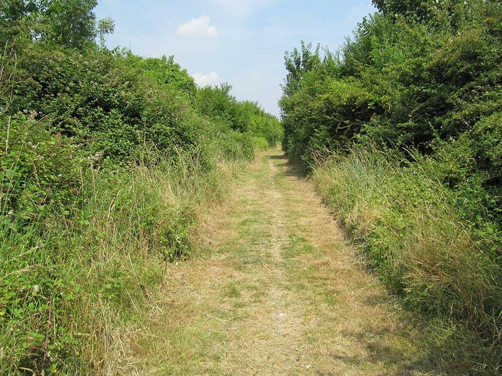 Disused Railway Line, South Malling LWS